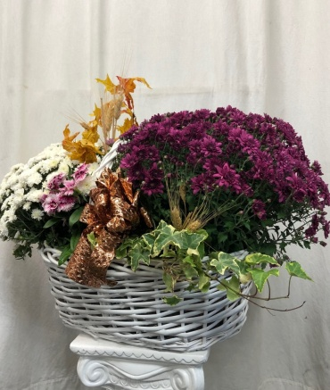 Chrysanthemum Autumn Planter